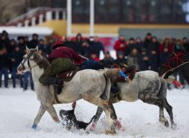 На Московском ипподроме разодрали козла. Что дальше — коррида или гладиаторские бои?