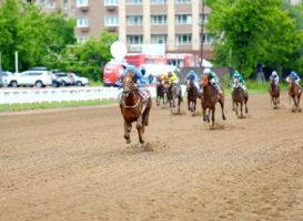 Удачное воскресенье для конного завода «Донской»