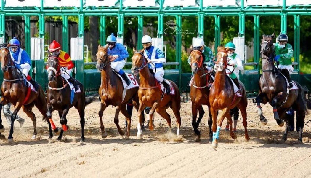 Первые испытания лошадей в июле