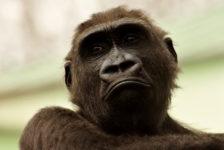 Почему мы играем как обезьяны