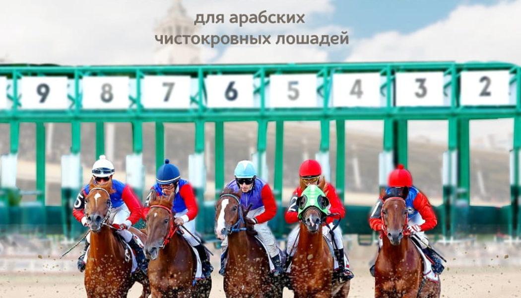 На старте – арабские лошади